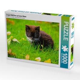 """Puzzle """"Junges Kätzchen auf einer Wiese"""""""