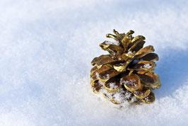 Goldener Kiefernzapfen im Schnee, Briefkarte