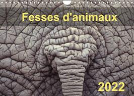 Fesses d'animaux (2022)