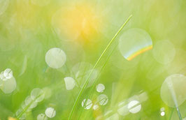 Lichter im Gras, Briefkarte