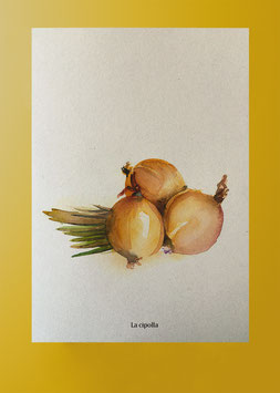 Plakat Zwiebel