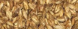 Kornspreu für die Legenester