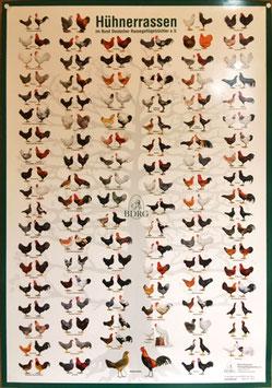 Poster: Stammbaum der Rassenhühner