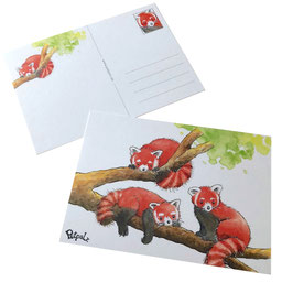 Postkarte: Rote Pandas