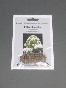 Felsenkirsche, Prunus mahaleb, Freilandbonsai, Geschenkidee, Bonsai - Samen im Geschenkkarton