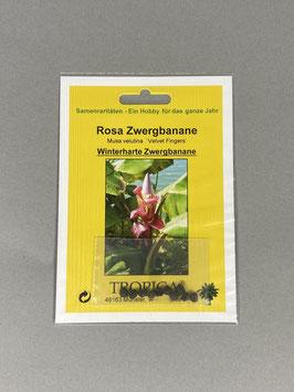 Rosa Zwergbanane / Mus velutina `Dwarf Velvet Fingers`, Geschenkidee, Seltene Samen, Besonderheit, Rarität