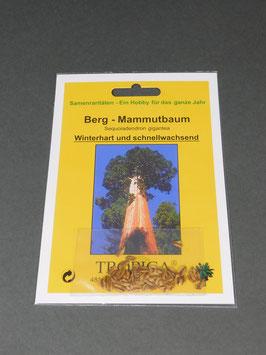 Berg - Mammutbaum, Sequoiadendron gigantea, Geschenkidee, Seltene Samen, Besonderheit, Rarität