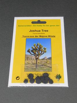 Joshua Tree, Yucca brevifolia, Geschenkidee, Seltene Samen, Besonderheit, Rarität