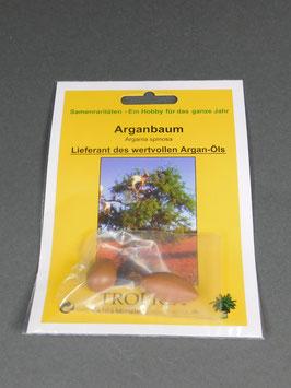 Arganbaum, Argania spinosa, Geschenkidee, Seltene Samen, Besonderheit, Rarität