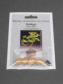 Samen+Anzuchtset: Ginkgo - Urweltbaum, Ginkgo biloba, Freilandbonsai, Geschenkidee, Bonsai-Samen