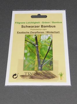 Schwarzer Bambus, Phyllostachys nigra, Geschenkidee, Seltene Samen, Besonderheit, Rarität
