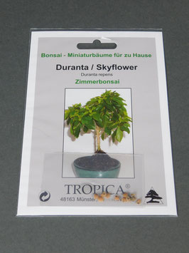Duranta-Skyflower, Duranta repens, Zimmer-Bonsai, Geschenkidee, Bonsai-Samen