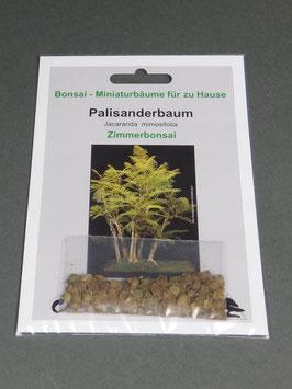 Samen+Anzuchtset: Palisanderbaum, Jacaranda mimosafolia, Zimmerbonsai, Geschenkidee, Bonsai-Samen