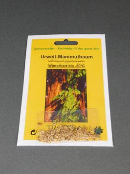 Urwelt-Mammutbaum, Metasequoia glyptostroboides, Geschenkidee, Seltene Samen, Besonderheit, Rarität