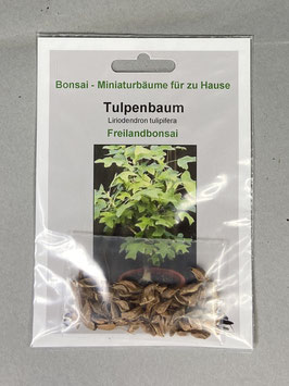 Samen+Anzuchtset: Tulpenbaum, Liriodendron tulipifera, Freilandbonsai, Geschenkidee, Bonsai-Samen