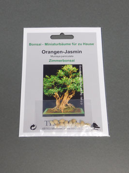 Samen+Anzuchtset: Orangen-Jasmin, Murraya paniculata, Zimmerbonsai, Geschenkidee, Bonsai-Samen