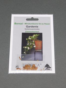 Samen+Anzuchtset: Gardenie, Gardenia jasminoides, Zimmerbonsai, Geschenkidee, Bonsai - Samen
