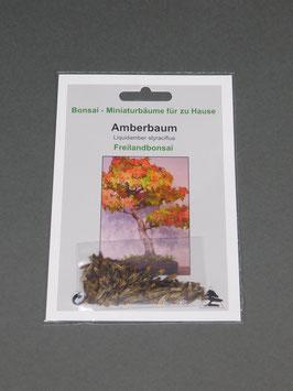 Samen+Anzuchtset: Amberbaum, Liquidamber styraciflua, Freilandbonsai, Geschenkidee, Bonsai - Samen