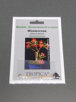 Wüstenrose, Adenium obesum, Zimmerbonsai, Geschenkidee, Bonsai-Samen
