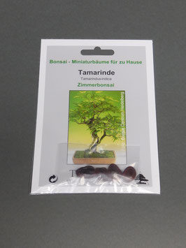 Tamarinde, Tamarindus indica, Zimmerbonsai, Geschenkidee, Bonsai-Samen