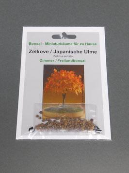 Samen+Anzuchtset: Zelkove / Japanische Ulme, Zelkova serrata, Zimmerbonsai/Gartenbonsai, Geschenkidee, Bonsai-Samen
