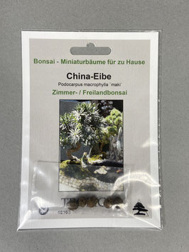 Samen+Anzuchtset: China-Eibe Podocarpus macrophylla `maki`, Zimmerbonsai, Freilandbonsai Geschenkidee, Bonsai - Samen