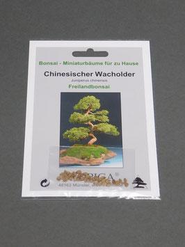 Chinesischer Wacholder, Juniperus chinensis, Freilandbonsai, Geschenkidee, Bonsai-Samen im Geschenkkarton
