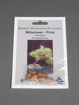 Mittelmeer-Pinie, Pinus pinea, Zimmerbonsai, Geschenkidee, Bonsai-Samen