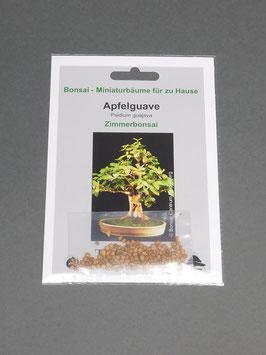 Apfelguave, Psidium guajava, Zimmerbonsai, Geschenkidee, Bonsai - Samen im Geschenkkarton