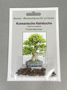 Samen+Anzuchtset: Koreanische Hainbuche, Carpinus coreanus, Freilandbonsai, Geschenkidee, Bonsai - Samen