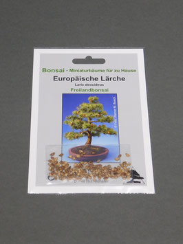Europäische Lärche, Larix decidua, Freilandbonsai, Geschenkidee, Bonsai-Samen im Geschenkkarton