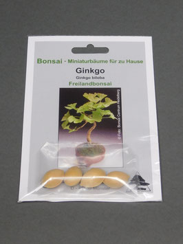 Ginkgo - Urweltbaum, Ginkgo biloba, Freilandbonsai, Geschenkidee, Bonsai-Samen im Geschenkkarton