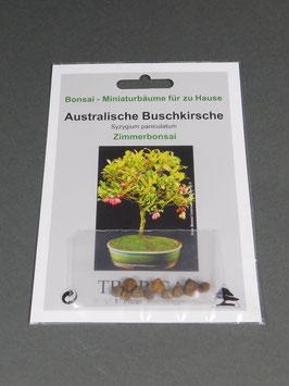Samen+Anzuchtset: Australische Buschkirsche, Syzygium paniculatum, Zimmerbonsai, Geschenkidee, Bonsai - Samen