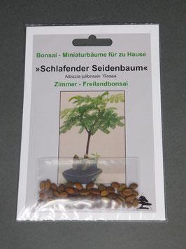 Samen+Anzuchtset: Schlafender Seidenbaum-Pink, Albizzia julibrissin `Rosea`, Zimmer- / Freiland-Bonsai, Geschenkidee, Bonsai-Samen