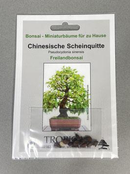 Samen+Anzuchtset: Chinesische Scheinquitte, Pseudocydonia sinensis, Freilandbonsai, Geschenkidee, Bonsai - Samen