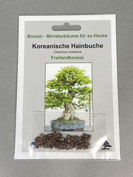 Koreanische Hainbuche, Carpinus coreanus, Freilandbonsai, Geschenkidee, Bonsai - Samen