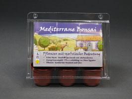 Mediterrane Bonsai, Geschenkidee, Mini-Gewächshaus mit Bonsai - Samen