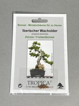 Samen+Anzuchtset: Iberischer Wacholder, Juniperus phoenicea, Zimmer - Freilandbonsai, Geschenkidee, Bonsai-Samen