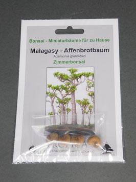 Samen+Anzuchtset: Malagasy-Affenbrotbaum, Adansonia grandidieri, Zimmerbonsai, Geschenkidee, Bonsai-Samen