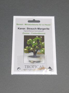 Samen+Anzuchtset: Kanarische Strauch-Margerite, Argyramthemum foeniculaceum, Zimmer-, Freilandbonsai, Geschenkidee, Bonsai - Samen