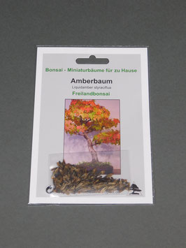 Amberbaum, Liquidamber styraciflua, Freilandbonsai, Geschenkidee, Bonsai - Samen