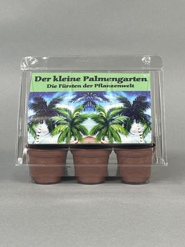 Der kleine Palmengarten, Geschenkidee, Mini-Gewächshaus mit Samen