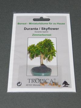 Samen+Anzuchtset: Duranta-Skyflower, Duranta repens, Zimmerbonsai, Geschenkidee, Bonsai-Samen