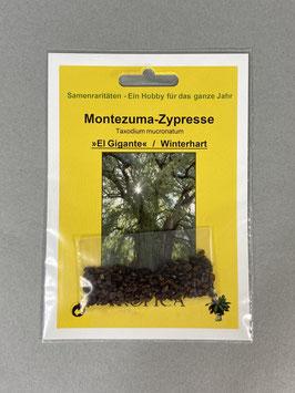 Montezuma - Zypresse / Mexikanische Sumpfzypresse, Taxodium mucronatum, Geschenkidee, Seltene Samen, Besonderheit, Rarität