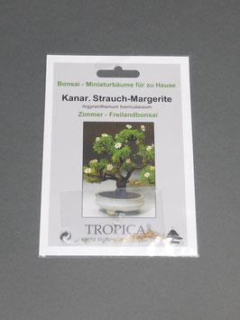 Kanarische Strauch-Margerite, Argyramthemum foeniculaceum, Zimmerbonsai / Freilandbonsai, Geschenkidee, Bonsai - Samen