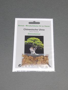 Samen+Anzuchtset: Chinesische Ulme, Ulmus chinensis, Zimmerbonsai, Geschenkidee, Bonsai - Samen