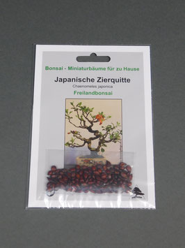 Samen+Anzuchtset: Japanische Zierquitte, Chaenomeles japonica, Freilandbonsai, Geschenkidee, Bonsai-Samen