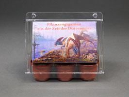 Pflanzengiganten aus der Zeit der Dinosaurier, Geschenkidee, Mini-Gewächshaus mit Bonsai - Samen