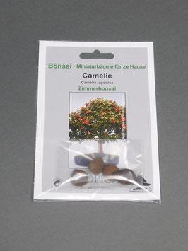Camelie, Camelia japonica, Zimmerbonsai, Geschenkidee, Bonsai - Samen im Geschenkkarton