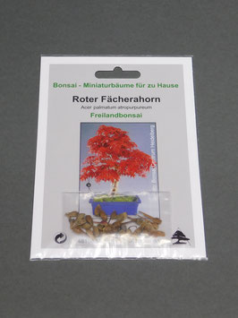 Samen+Anzuchtset: Roter Fächerahorn, Acer palmatum atropurpureum, Freilandbonsai, Geschenkidee, Bonsai-Samen